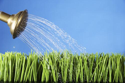 wateringcanblog.jpg